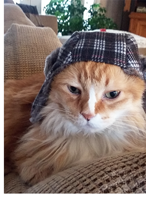 Chester in hat