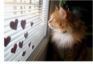 Chester's Valentine Hearts