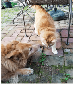 Luna and Chester on patio